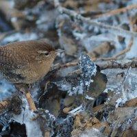 Маленькая птичка :: Anna L