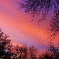 Закатное небо :: Светлана