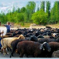 Пастухи.. :: Людмила Богданова (Скачко)