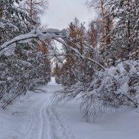 Снежная арка :: vladimir
