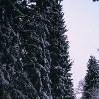 Зимний парк :: Дарья Гречина