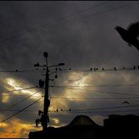 la paloma adieu :: meltzer