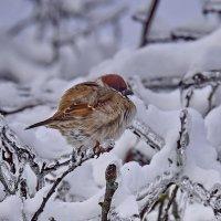 Ну  совсем  холодно!!! :: Валера39 Василевский.