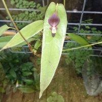 Это тоже орхидея :: Galina194701
