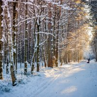 Зима!!! :: Ирина Никифорова