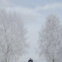 Прыжок в зиму :: Василий Либко