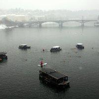 Рождественские купания :: Ольга