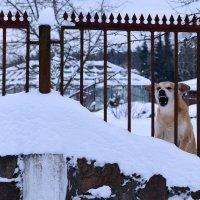 ....снега не дам !!! :: Vasil Klim