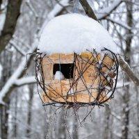 Кормушка для птиц :: Милешкин Владимир Алексеевич