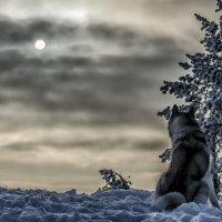 Winter :: Dmitry Ozersky