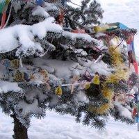 Прощание с новогодней ёлкой :: Ирина Румянцева