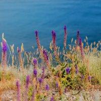 Яркие травы Крыма :: Алена Бадамшина