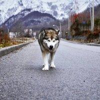 beautiful dog :: Наталья Лев