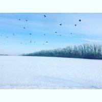 Зима :: Любовь Береснева
