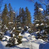 Зимний лес :: Дмитрий Гольнев