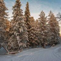 Вечер в лесу :: vladimir