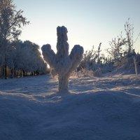 Зима :: Глен Ленкин