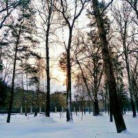 Пьяное Солнце :: Алексей Лукаев