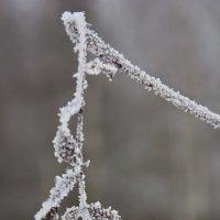 росчерки зимы :: Марина Симакова