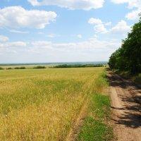 Вдоль пшеничного поля. :: Виктор ЖИГУЛИН.