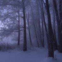 Волшебный лес :: Александра