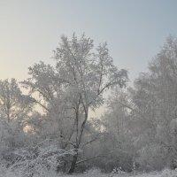 зимушка-зима) :: татьяна малышева