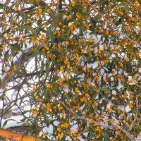 Деревья цветут. :: Татьяна ❧
