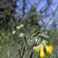 Весенние цветы :: Ivan teamen