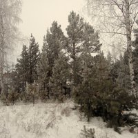 Зимняя тишина. :: nadyasilyuk Вознюк
