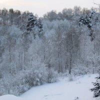 Морозно :: Galaelina