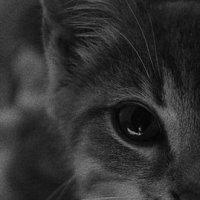 Добрый,любящий взгляд. :: Дарья