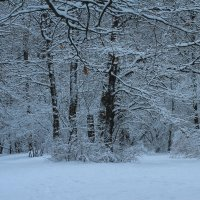 Зимний вечер! :: Наташа Шамаева