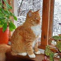 Вася  у  окна. :: Валера39 Василевский.