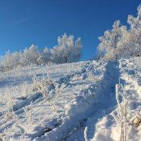 По снежной колие :: Наталья Юрова