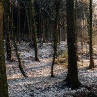 Первый снежок :: Ира Балкина