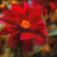 Red flower,,, :: марк