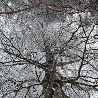 В морозное небо :: Михаил Лобов (drakonmick)