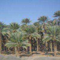 Дорога на Мёртвое море :: Надежда