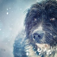 Бездомный пес... :: Анна Булгакова