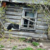 причина запустения - под окном :: Леонид Натапов