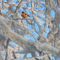 Зима, холода... :: НАТАЛИ natali-t8