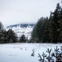 Зима в разгаре :: Елена Фалилеева-Диомидова