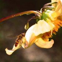 Пчелы то-же хотят пить. :: Евгений Кузнецов