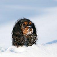 Собака :: Алексей