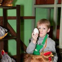 Наши в Кидбурге. На ферме. Секретная работа - закладывание яиц в куриц для будущих покалений :: Дарья Казбанова