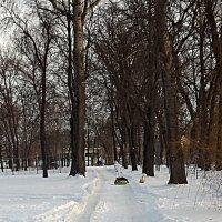 Зимняя Аллея :: Андрей Сотников