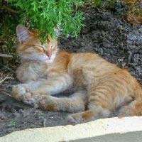 Котик вокзальный разморённый ... :: Юлия Бабитко