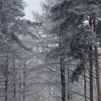 Уберите холодные лапы! :: Михаил Лобов (drakonmick)