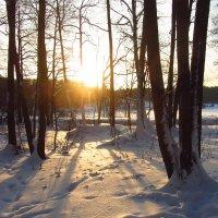 Солнце появилось - жди весну :: Андрей Лукьянов