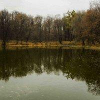Озеро в старом парке :: Марина Савчиц
